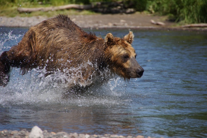 Books vs Movies: We're Going On A Bear Hunt